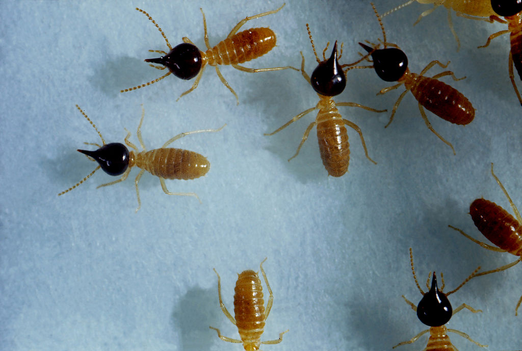 3 Simple Ways to Prevent Termite Invasion During Winter