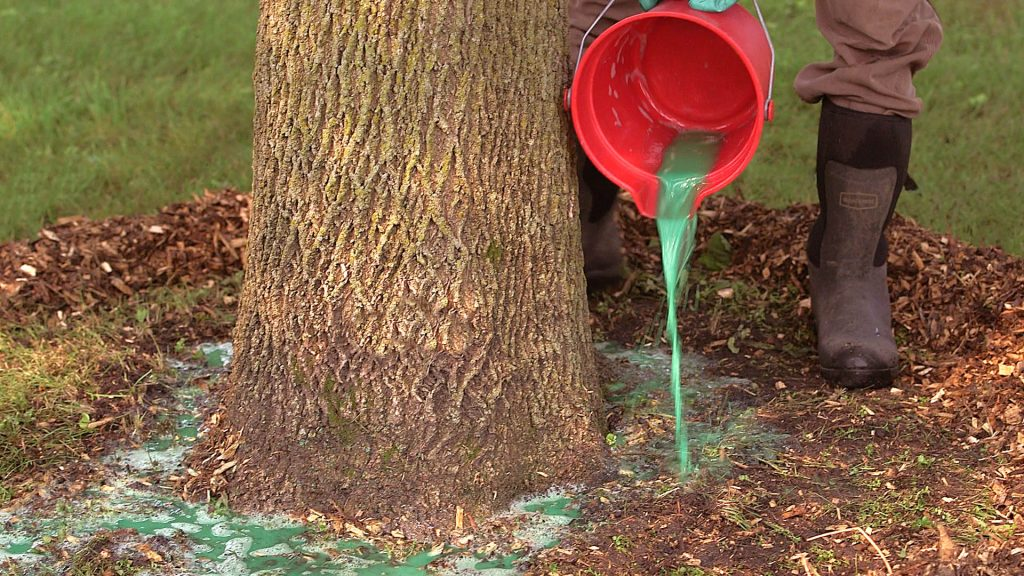 Tips for controlling Emerald Ash Borer